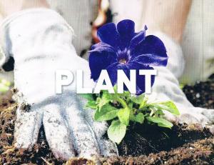 PLANT Ecc 3